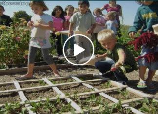 teaching kids how to grow their own food