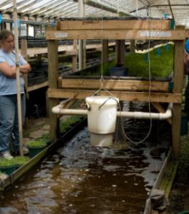 3-tiered aquaponics system.