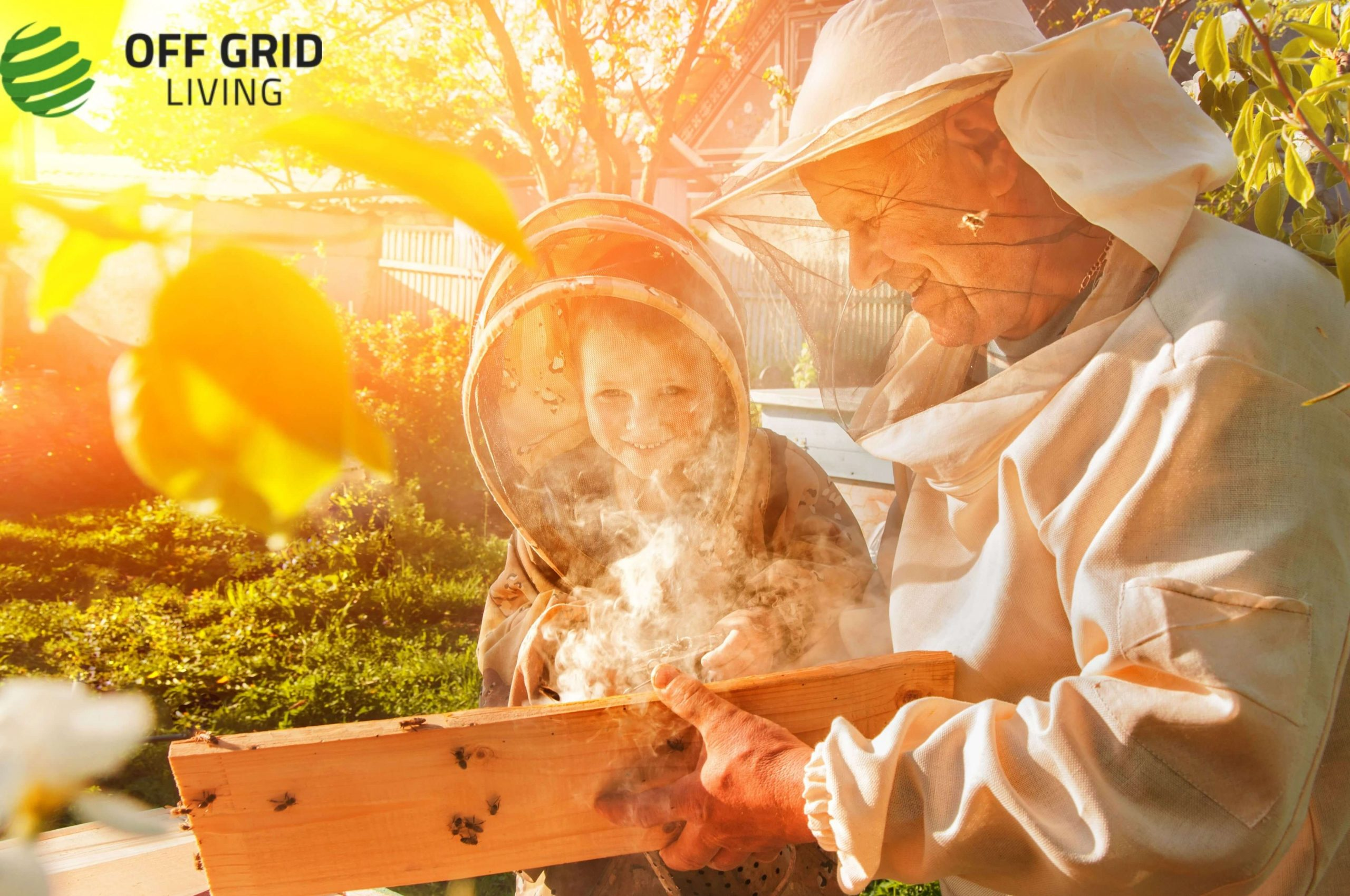 Benefits and How-To Guide of Beekeeping