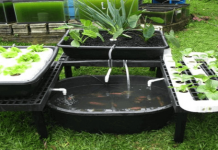 Aquaponics-example-cover